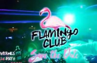 Ted – Flamingo